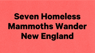 """show title """"SEVEN HOMELESS MAMMOTHS WANDER NEW ENGLAND"""" in black text on a pink background"""